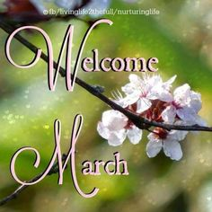Welcome March Images Quotes Hello March Images, Hello February Quotes, March Quotes, Wallpaper For Facebook, Photos For Facebook, March Birth Sign, New Month Quotes, Monthly Quotes, New Month Wishes