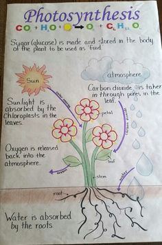 Photosynthesis Teaching Plan, Teaching Aids, Teaching Science, Science Education, Science Activities, Physical Science, Science Experiments, Science Lessons, Life Science