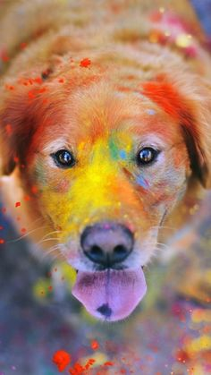 Colorful Paint Giant Dog Animal iPhone 6 wallpaper