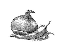 Woodcut pen and ink engraved illustration of onion and pepper
