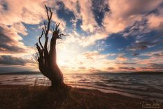 Dane Vetter Resurrection - An old lonely tree on the shore of the lake. A tree that looks from a distance as he would bear no life in themselves. But the few small branches with leaves show that he has perhaps not given up ...