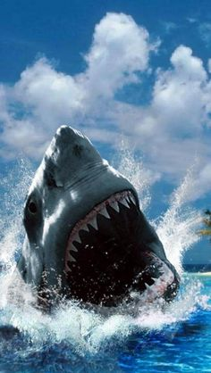 Great White Shark  I've seen a lot of great white photos this one for me captures the primal fear of this predator.