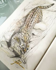 """Gefällt 166 Mal, 3 Kommentare - bibi jay dorian 🏳️🌈🇦🇹🇭🇷 (@bibijaydorian) auf Instagram: """"Ocelot sketch I wanted to play with colored pencils and noticed that I shouldn't mix it with…"""" Ocelot, Colored Pencils, Jay, Sketch, Instagram, Leopard Cat, Colouring Pencils, Sketch Drawing, Sketches"""