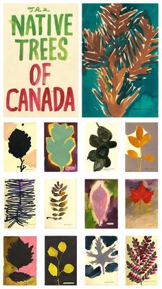 A gorgeous book by artist Leanne Shapton highlights the native trees of Canada in the form of dense watercolors.