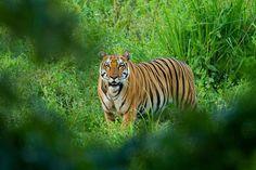 kaziranga national park assam india - Bing Images