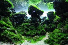 Planted Aquarium, Nature Aquarium, Aquarium Fish Tank, Live Aquarium, Aquascaping, Nano Cube, Diy Hanging Planter, Hd Nature Wallpapers, Aquarium Design