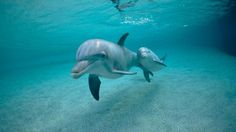 Water Dolphins Animals