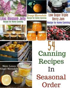 Canning 101 - Pickled Dill Carrots - One Hundred Dollars a Month