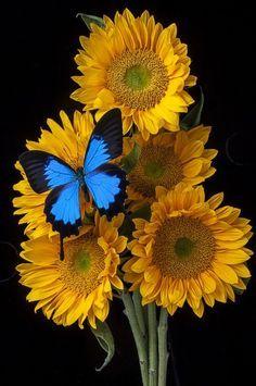 Sunflower bouquet by Garry Gay