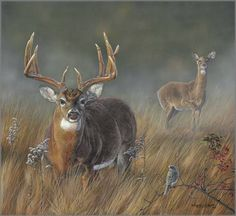 Tips, Tricks, And Techniques For The Best Family Camping Experience Wildlife Paintings, Wildlife Art, Deer Paintings, Hunting Art, Deer Hunting, Hunting Painting, Whitetail Hunting, Whitetail Deer Pictures, Deer Pics