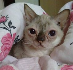 Severino, the  adorable kitty with down syndrome