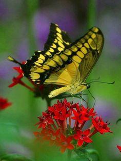Color in flight....