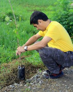 Manila Allied Lions Club (Philippines) | Lions held a tree planting project