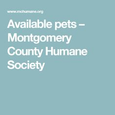 Available pets – Montgomery County Humane Society County Court, Montgomery County, Humane Society, Website, Pets, Editor, Philadelphia, Artists, Animals