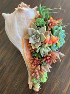 Succulent Shell Gift Floral Arrangement Lasts for Months // image 4