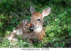 fawn nose -dog - Google Search