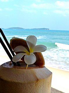 Coconut ~ Plumeria drink...
