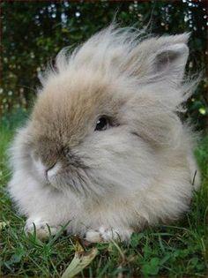 How do you like my hairdo ?