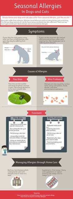 Your dogs and cats also suffer from seasonal allergies as we do.The most common causes of seasonal allergies in dogs and cats are flea bites and mite problems. This infographic tells us the information about the symptoms, causes and treatment of seasonal allergies in pets .