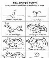 pumpkin literacy activity