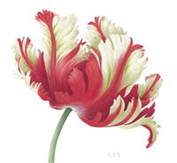 parrot tulips watercolor - Google Search