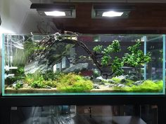 """fuck-yeah-aquascaping: """"Happy New Year with Dave Chow's spectacular tank """""""