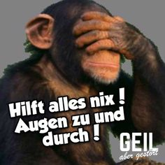 Es ist ganz und gar nicht okay! Da werden Tatsachen verdreht, dass einem nur no It is not okay at all! Since facts are twisted that only a no Wedding Gifts For Newlyweds, Dance Quotes, Good Humor, Funny Animal Videos, Statements, Man Humor, Its Okay, Funny Cats, Coaching