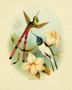 Hummingbirds Bird art print Antique prints by VictorianWallArt