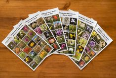 Have fun hunting the flowers at Phillipskop with their Plant Spotter Guides Colorful Plants, Local Attractions, Have Fun, Hunting, Mountain, Flowers, Florals, Flower, Blossoms