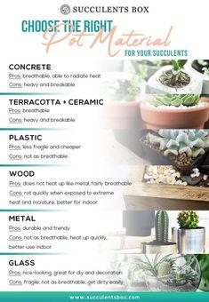 Succulent Planters: Concrete, Wood, Metal, Clay & Plastic Pots for Plants - Succulents Box Succulent Gardening, Succulent Care, Succulent Pots, Cacti And Succulents, Planting Succulents, Container Gardening, Indoor Gardening, Watering Succulents, Cacti Garden
