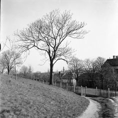 #sopron #hungary #europe #1970s #6x6 #bnw_life_shots #bnwhungary #bnw_planet #roleiflex #bw #bnw #blackwhite #blackandwhite #bnw_top #bnwsouls #bnw_rose #top_bnw #top_bnw_photo