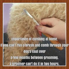 if you happen to adopt/buy a dog that requires regular grooming, be sure to call a brush or comb your new best friend!