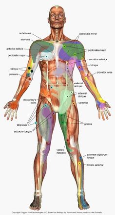 Trigger point chart - I need to try trigger points