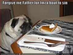 pug stealing food