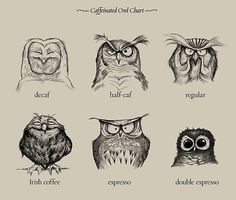 The world of coffee as explained by owls…