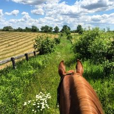 one-twenty-five: This day! (no filter needed! Country Barns, Country Life, Country Living, Country Charm, Majestic Horse, Beautiful Horses, Farm Images, Horse Ears, Serenity Now