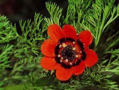 Buy Flower Seeds and Vegetable Seeds Online Planting Seeds, Planting Flowers, Garden Seeds, Vegetable Seeds Online, Border Plants, Seeds For Sale, Annual Flowers, Wildflower Seeds, Sang