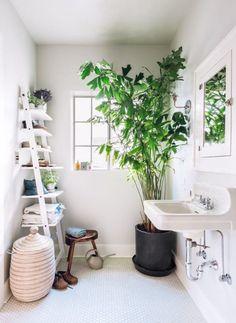 Las plantas de interior son un elemento decorativo de primer órden pero destacan sobre todo en este sentido las plantas grandes, arbustos y árboles, que por su porte majestuoso llenan cualquier est…