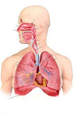 Úlcera del aparato digestivo: la importancia de tratarla a tiempo