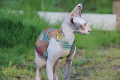 Sphynx Cat Clothes Japanese Dragon Tattcat™ for your pet. Tattoo illusion pet clothes for your hairless or furry dog or cat.