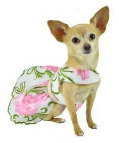 Pink Embroidered Flower Dog Pet Harness Dress 99c074b81