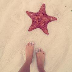 Bahamas! Starfish! Nassau Bahamas, Photo Memories, Dream Vacations, Starfish, Summer Time, Cassie, Mermaids, Sea Shells, Islands
