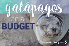 How to Travel the Galápagos Islands on a Budget — Two Wandering Soles   Travel Blog