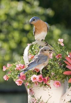 Pretty birds sitting on flowers. Looks like spring. Pretty Birds, Love Birds, Beautiful Birds, Beautiful World, Simply Beautiful, Beautiful Things, Beautiful Morning, Beautiful Pictures, Backyard Birds