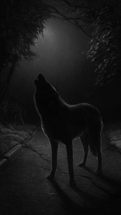 1607 best wolf art such images on pinterest in 2018 paintings umbra noctis publicscrutiny Images