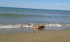 #sun #summer #sea