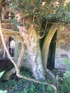Do some scenes or places make you feel inspired to write a story? How about this goblin-faced tree? Is he protecting the old building, or threatening it? What do you think? #crimsoncloakpublishing  #crimsonauthors  #story #emilyandtheenchantedwood Old Building, Cloak, Goblin, Garden Sculpture, Old Things, Author, Inspired, Places, Inspiration