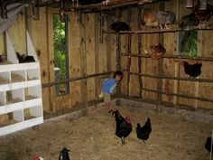 """He wanted """"to know how the chickens feel when they go in thru that door..."""""""