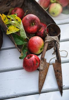 Apples by Titti Malmberg