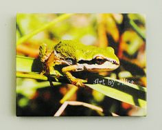 """Canvas, Photo, - Frog gripping a leaf - """"Mayne Island Marsh"""" A 8 x 10 inch canvas on a .75 width solid wood frame - pinned by pin4etsy.com This little tree frog was by a lake on Mayne Island, BC, Canada. Click on the PHOTO to see my other ART. #etsymntt #epiconetsy #picsher #etsyaaa #turtlesandpeace #etsyseller #etsyshop @Etsy #island #wildlife #frog #outdoors #nature #gift #art #love #colorful #canvas #print #shiptoyourdoor"""